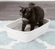 Cat Litter Box