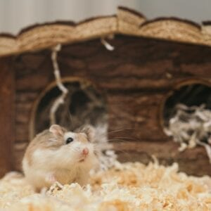 Small Animal Bedding