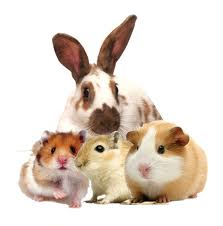 All Small Animal Suppies