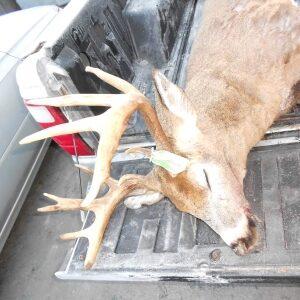 big buck hunting in Maine