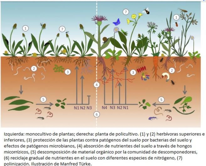 Ecosistema monocultivo vs policultivo