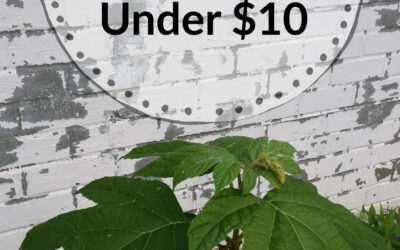 HOW I LIMEWASHED MY HOUSE FOR UNDER $10.00