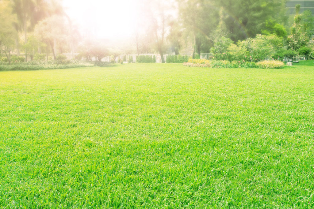 A photo of a green lawn.