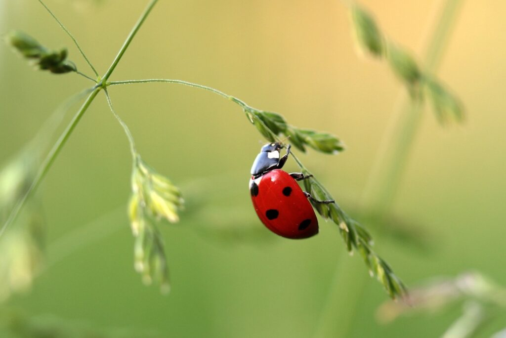 A photo of a ladybug on a plant.