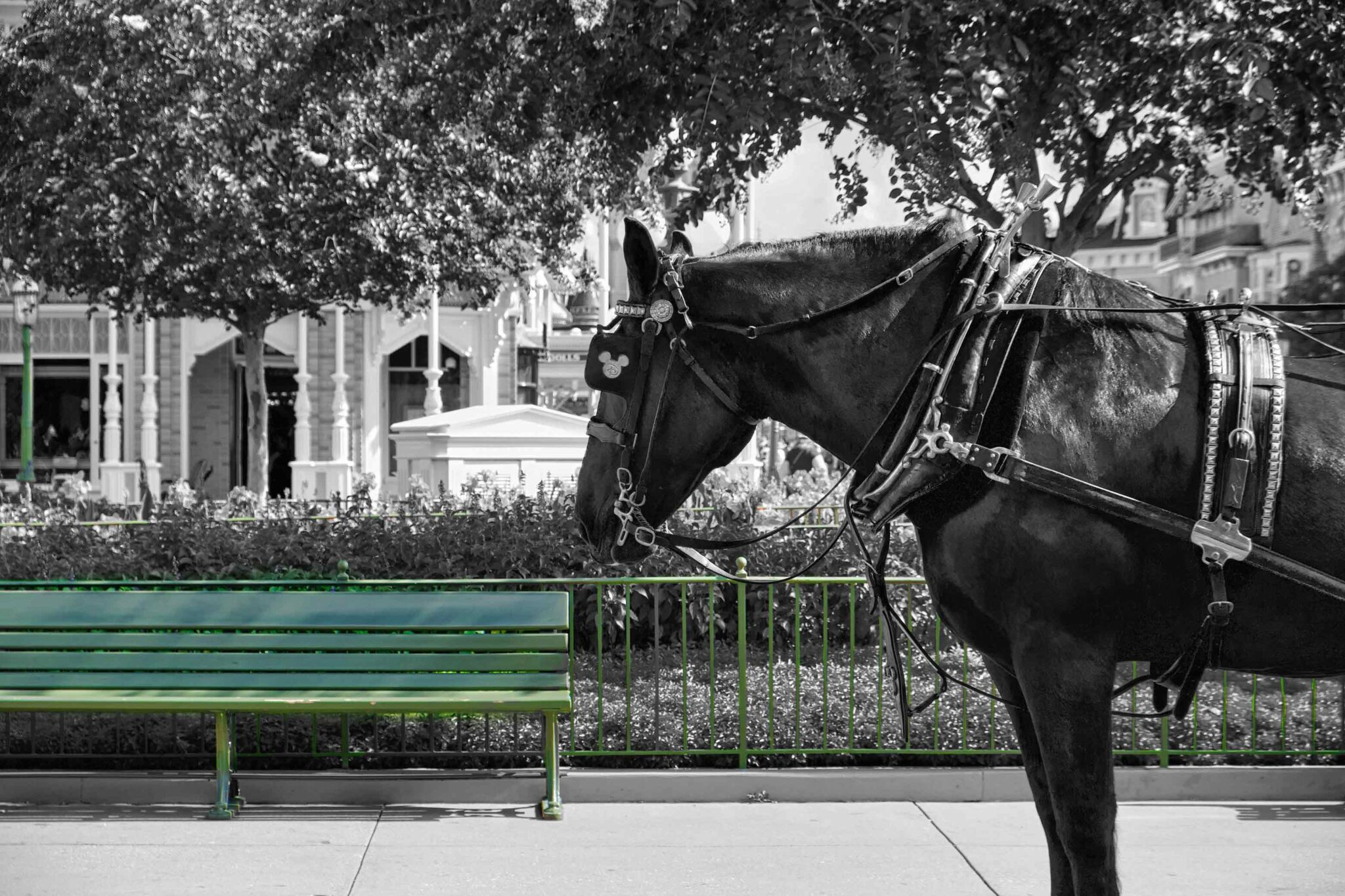 Disneyland Horse black and white except disney green