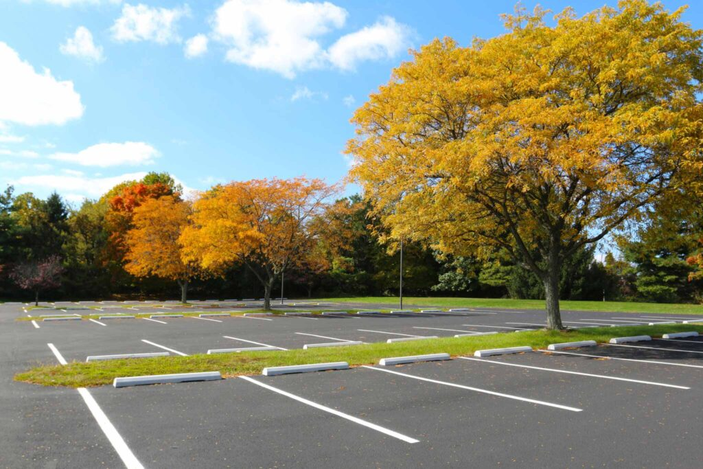 parking lot on a sunny day fall day with tree
