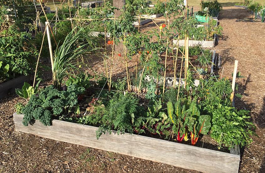 Community Garden bed at the Urban Farming Institute.