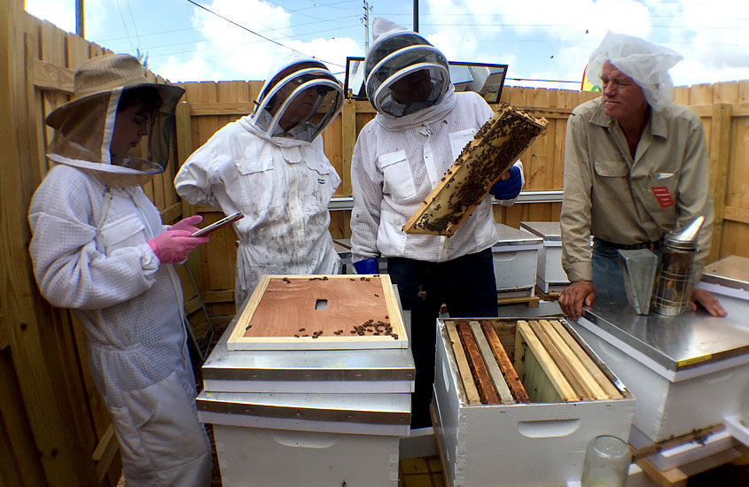 Micro Apiary inspection