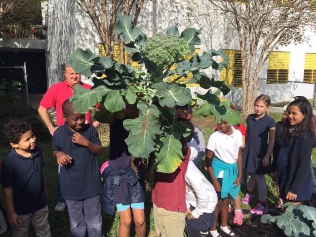 Urban Farming Institute's School Garden Harvest.
