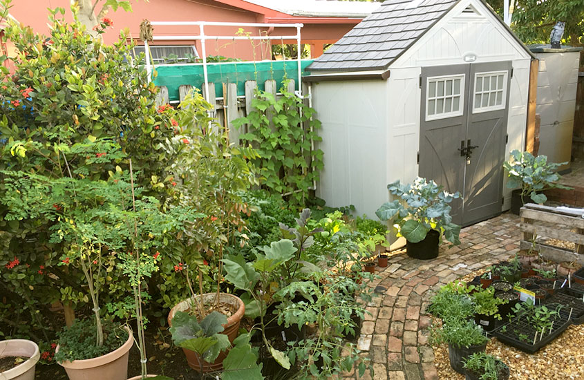 Backyard Edible Garden Design Urban Farming Institute