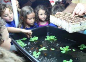 Aquaponics Field Trips Urban Farming Institute