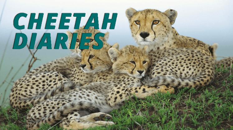cheetahdiaries_748x418