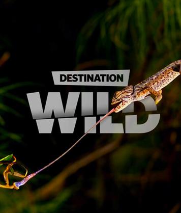 Destination Wild