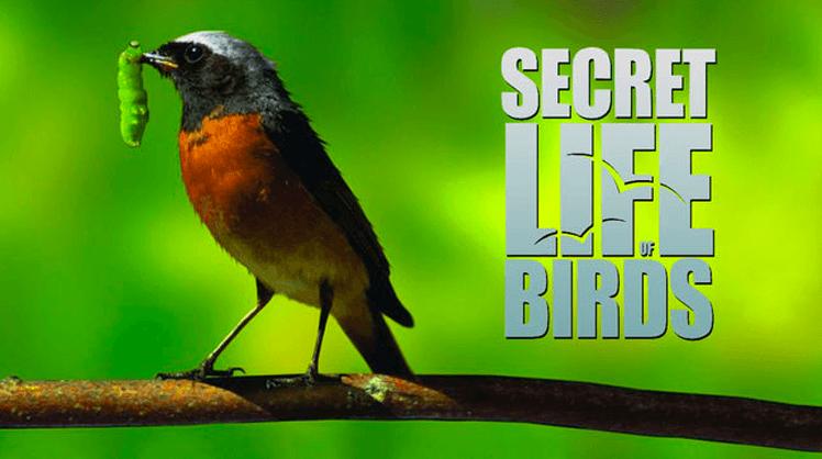 secretlifeofbirds_748x418