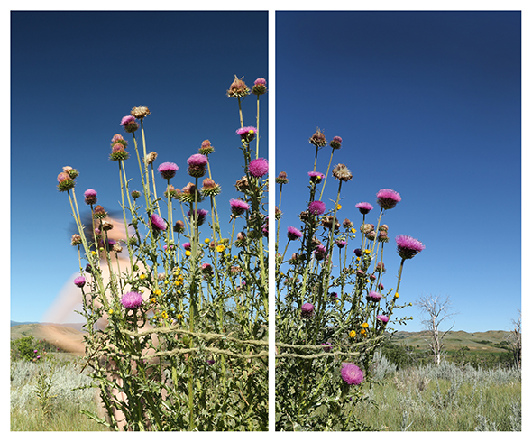 Thistle Bouquet, Wyoming