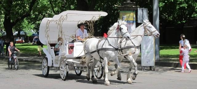 Lviv Horse Carriage