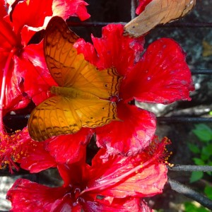 25.7 Penang, Malaysia Butterfly Park John Doan