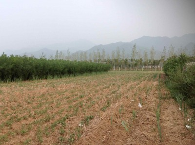 29. Mr. Xi's farm