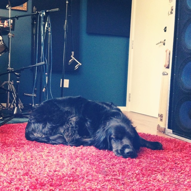 19 is a studio dog, plain and simple.