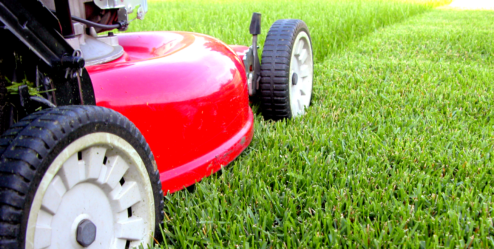 Lawn-Care-101-The-Right-Cut