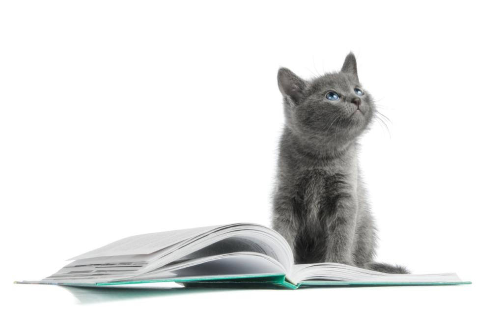 gray kitten sitting on an open notebook journal