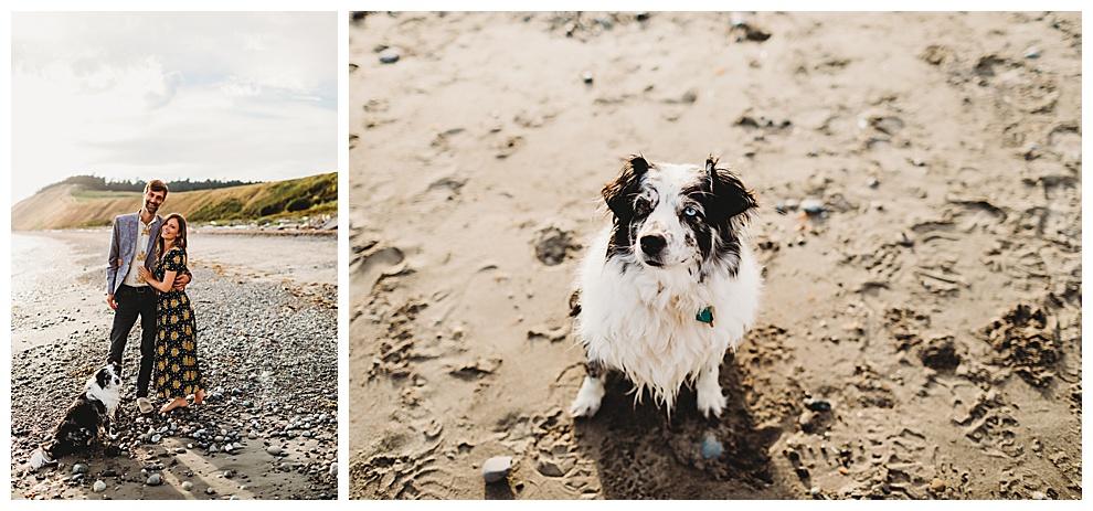 couple walking dog along beach