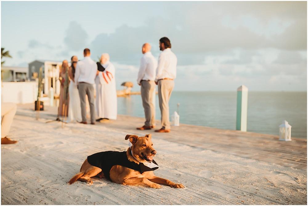 dog at wedding