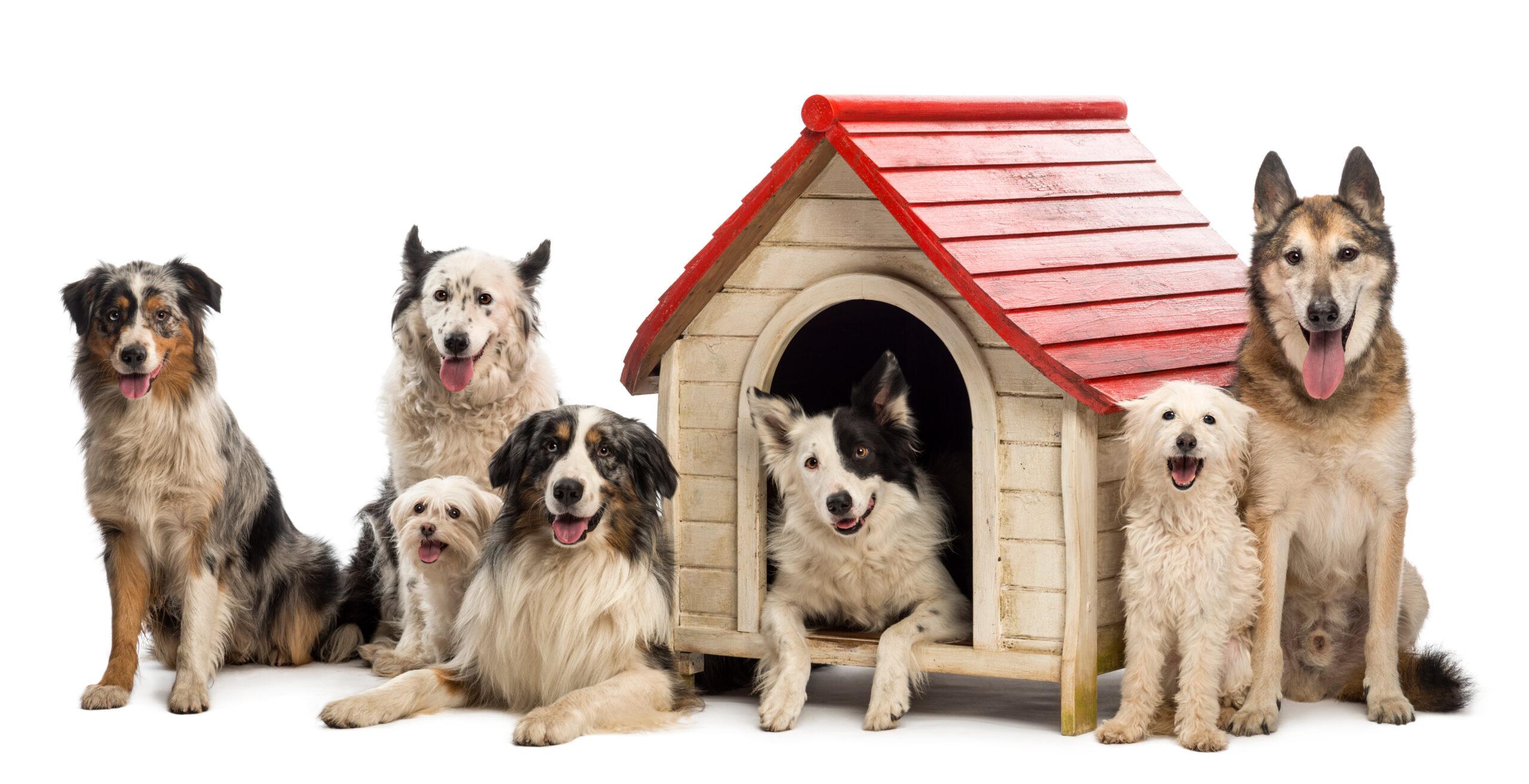 doghouse club