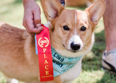 corgi first place prize