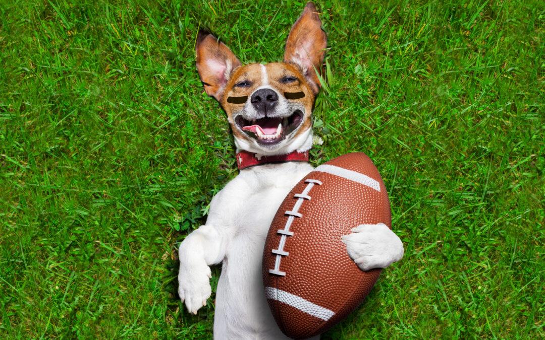 tired dog playing football
