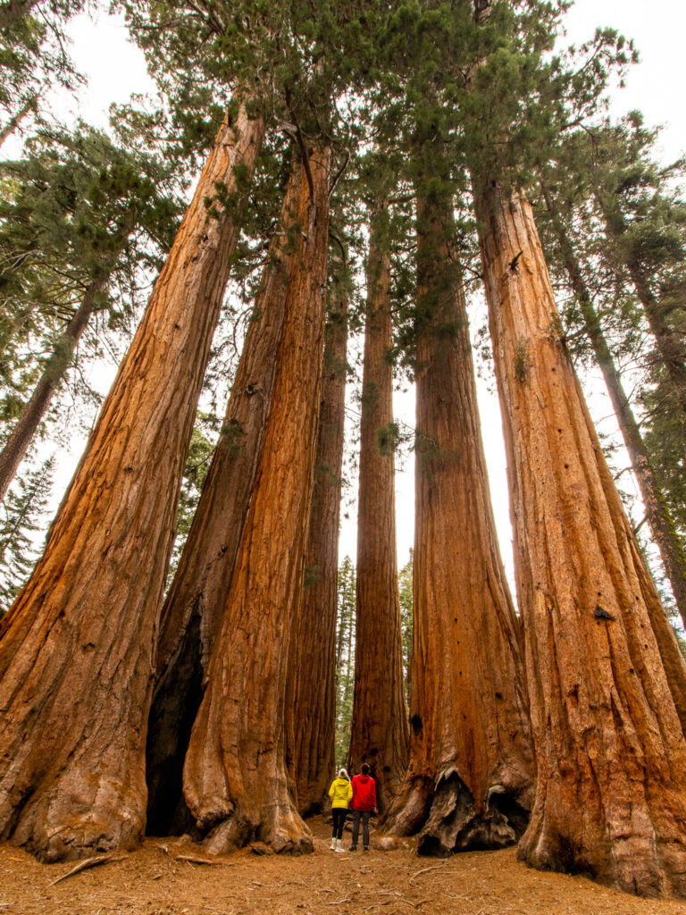Couple's Adventure in Sequoia National Park