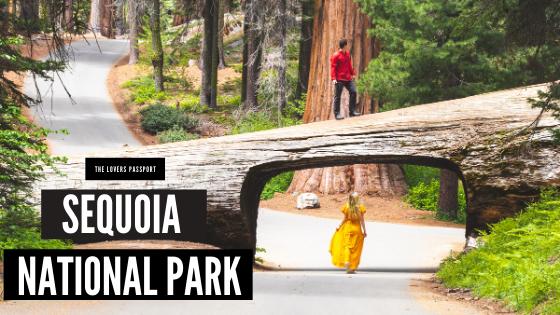 Couple's Adventure in Sequoia National Park