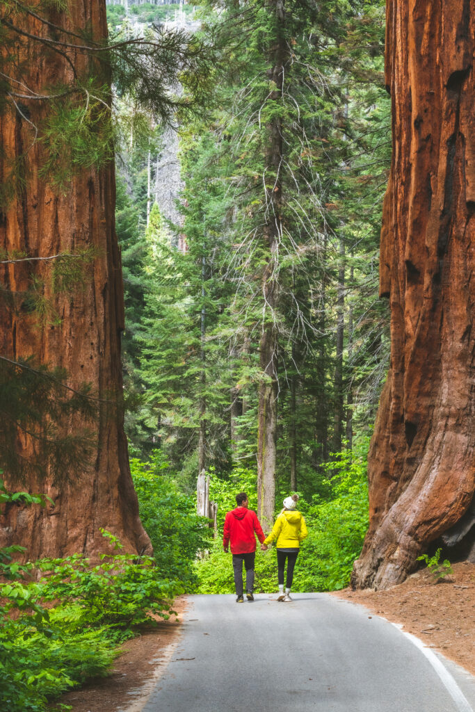 Sequoia National Park Adventure