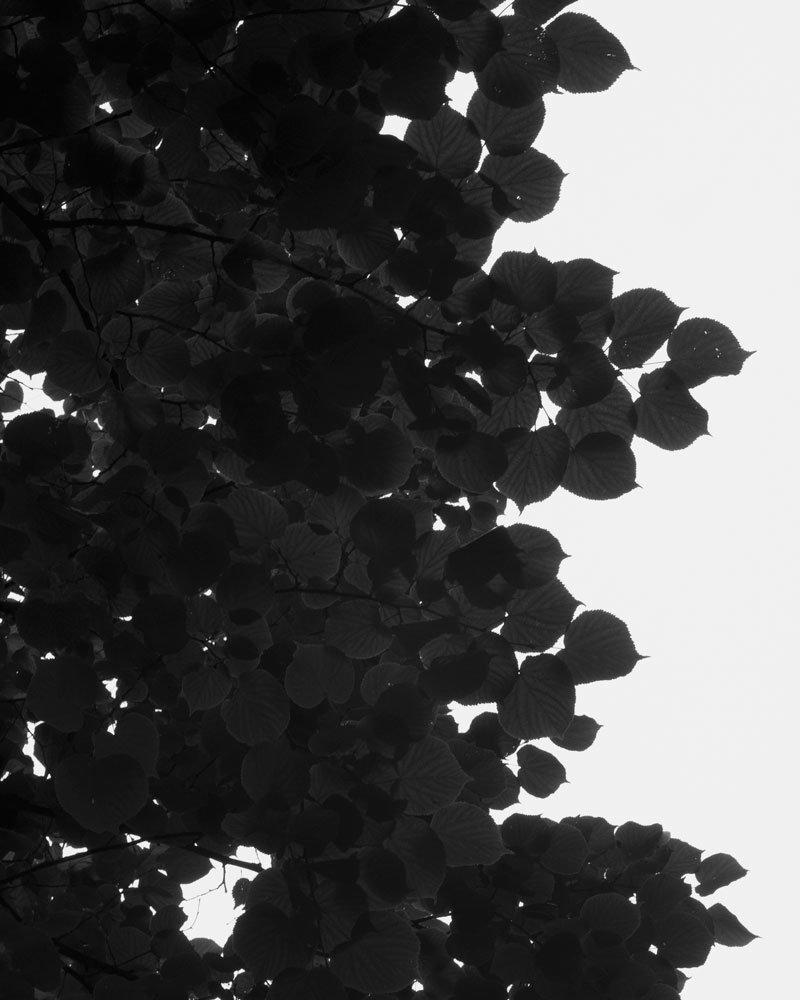 G.Y. - 07/18/16
