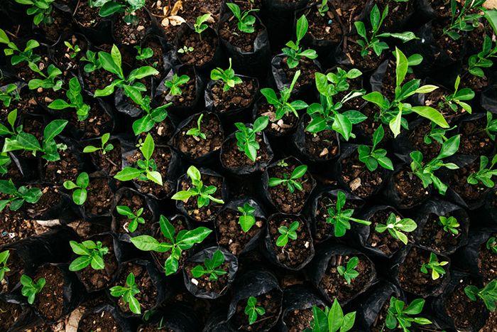 May Spotlight: Help Us Replant Haiti