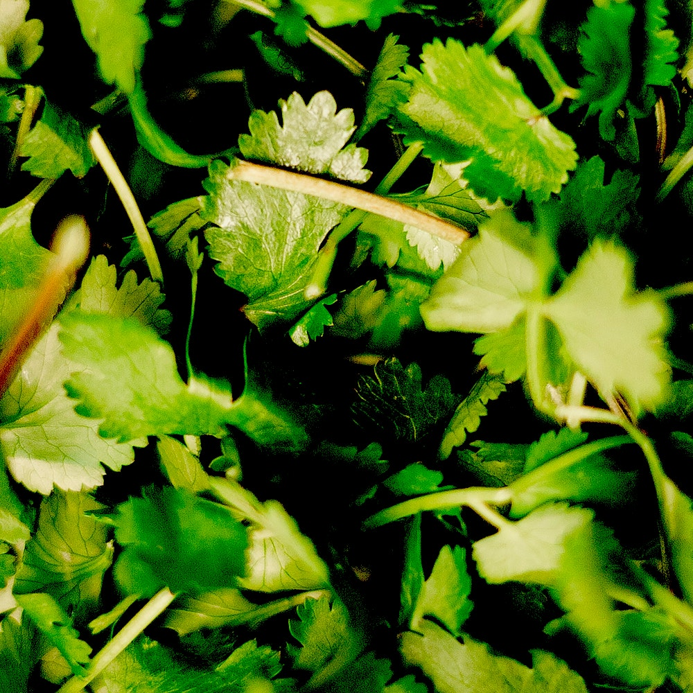 green-herbs-3338495