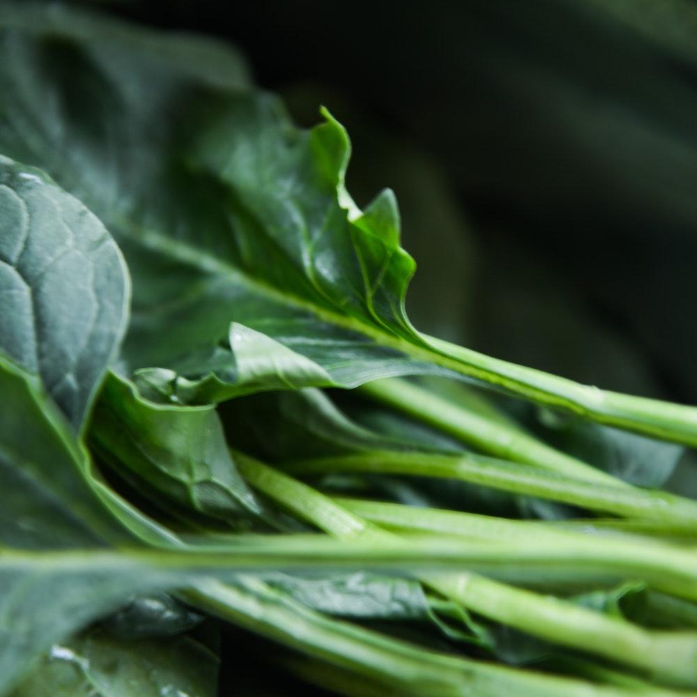 green-plant-750952