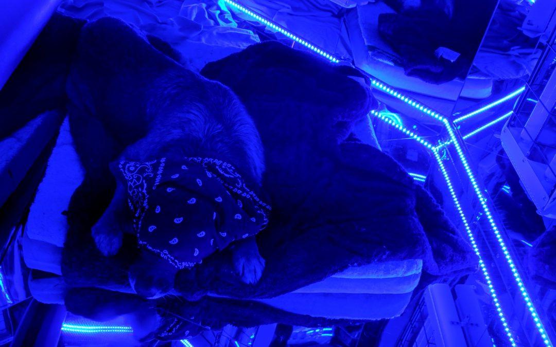Dogs Love Blu Rooms Too + Testimonial