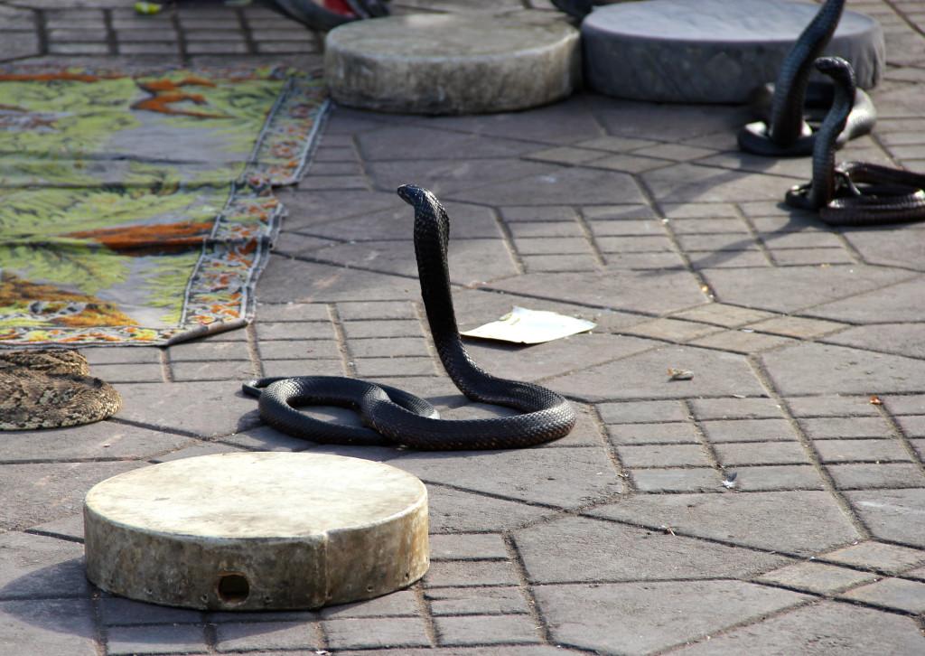 Snakes dancing in Jemaa el-Fna.