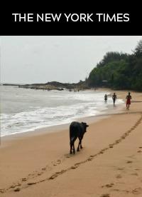 At a Yoga Retreat in India: Beach Walks, Body Treatments and Healing