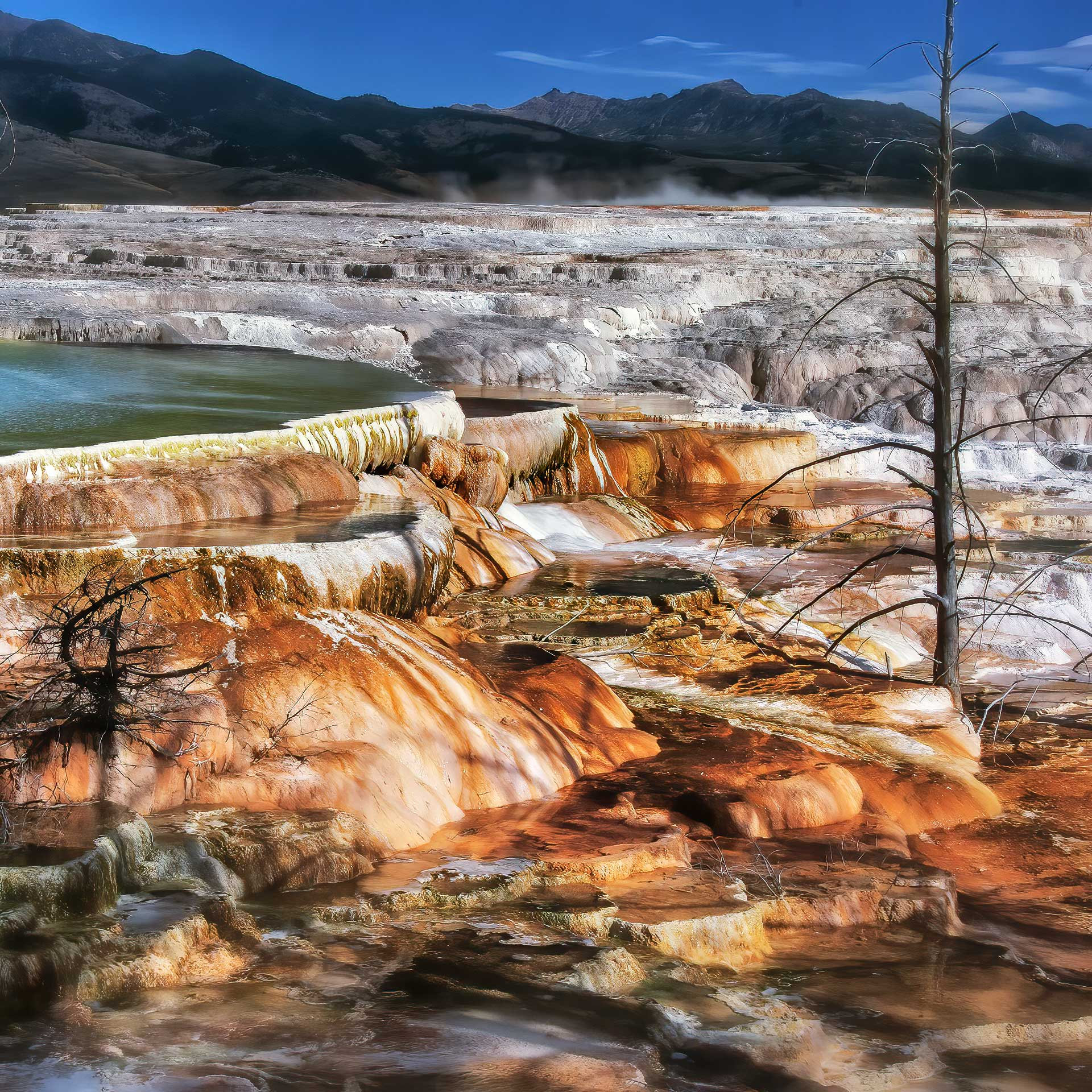 Mammoth Hot Springs, Yellowstone NP