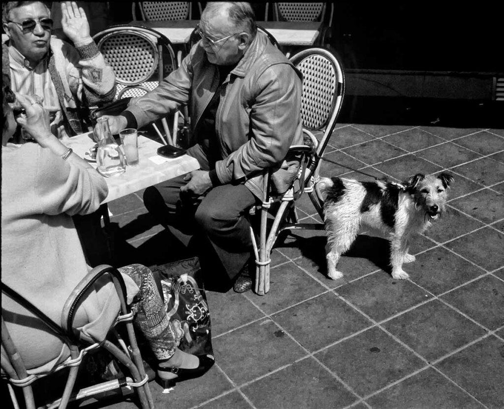 Terrier-near-table-Nice-BW-APR2020