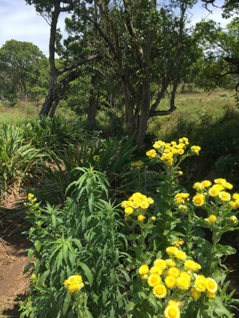 Flowers from Kloof Conservancy