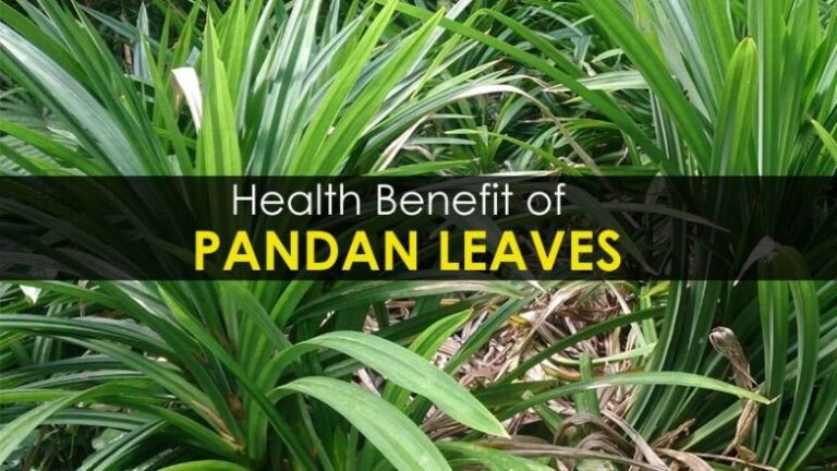 pandan-leaves-benefits