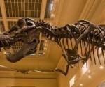 Dinosaur at Smithsonian Museum of Natural History.