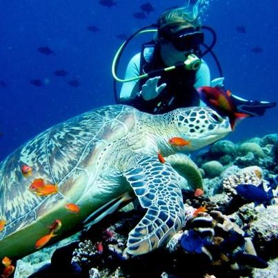 diving-underwaterescapades_647_072315034214