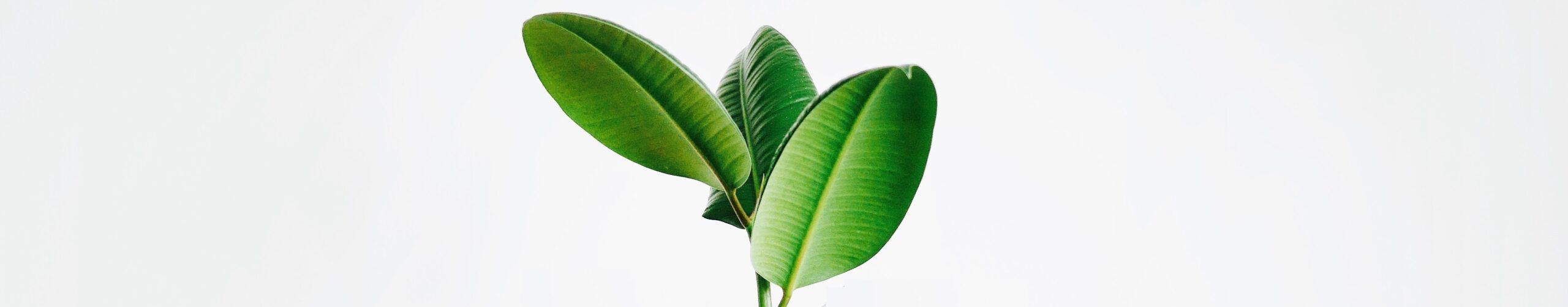 clean, green, plant-based, natural, vegan, skincare, clean beauty