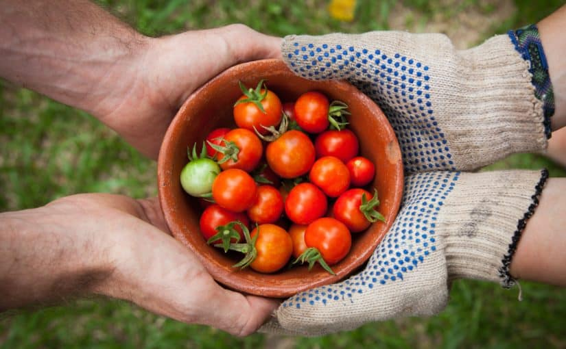 Pulling weeds and psychotherapy: What do self-exploration, self-discovery, and gardening have in common?
