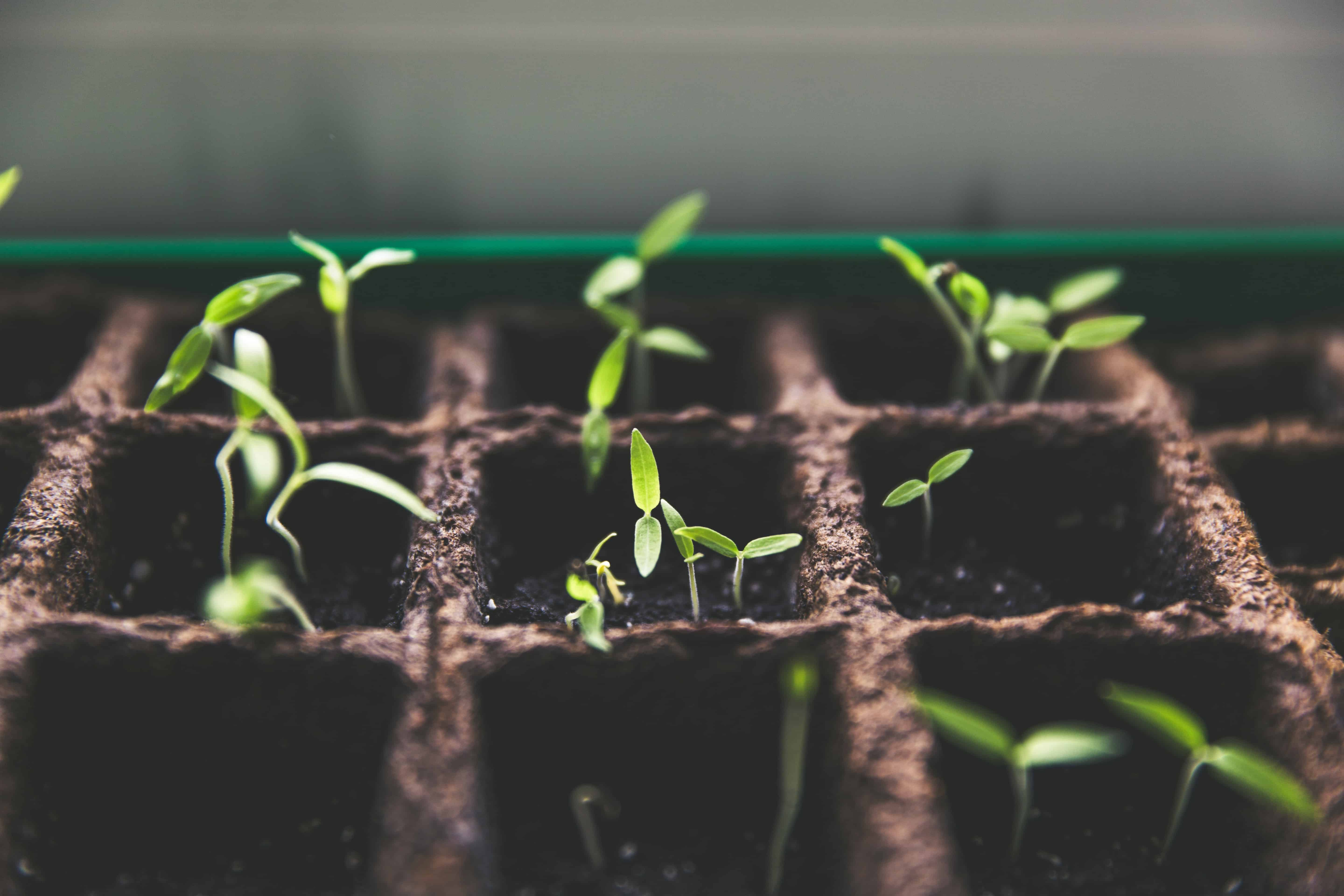 The fresh start of spring and all it's beauty can explain how psychotherapy works: opportunities for positive growth, self-exploration, and self-discovery. Getting ahead of the weeds with gardening and growth opportunities.