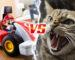 mario kart vs cat